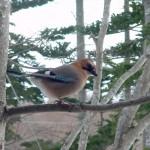 森の野鳥観察スポット