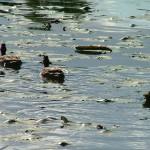 浮島・野鳥スポット