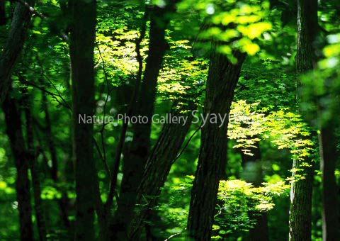 まるごと大沼写真1のコピー.jpg