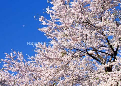 まるごと大沼写真2のコピー.jpg