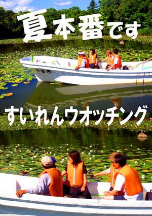 夏本番すいれんウオッチ.jpg