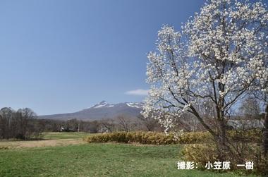 4月120「コブシ咲く頃」.JPGのサムネイル画像