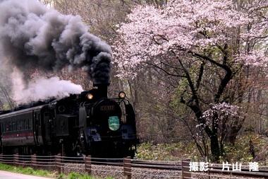 5月84「桜も歓迎」.JPG