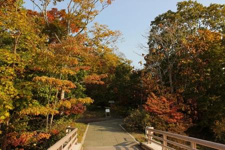 10.22大島の路.JPG