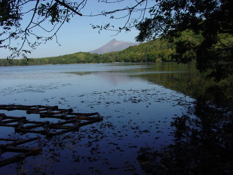 豊かな恵みのジュンサイ沼