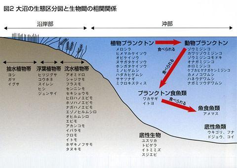 図2 大沼の生態区分図と生物間の相関関係